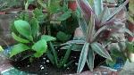 bowl-home-garden-ei9